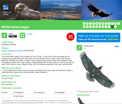 The RSPB's Bird Identifier makes working out exactly what you saw whilst on Mull that much easier. All we now need is a version for smartphones.